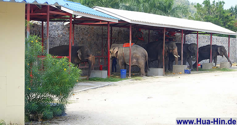 Elefanten im Stall Elephant Foundation