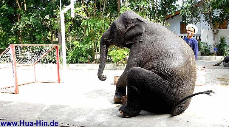 Elefantenfussball Elephant Foundation