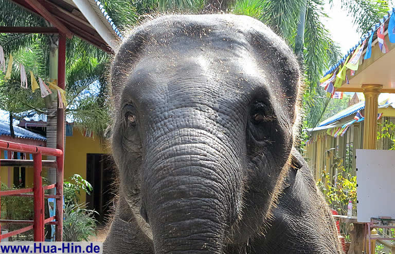 Junger Elefant Elephant Foundation