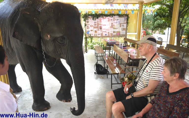 Elefantenliebe Elephant Foundation